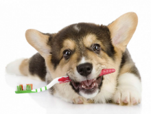 Toothfully, Treating Canine Teeth Is Serious Business