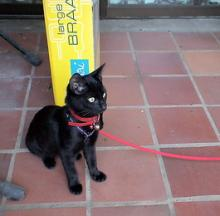 String Along: The Top 10 Cats On Leashes