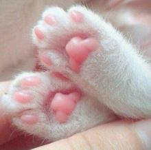 "Cat ""Jelly Beans"""