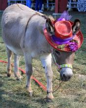 Red Hat Donkey