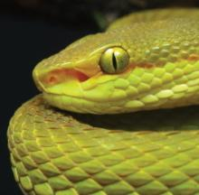 New Slithering Snake Named For Hogwarts' Salazar Slytherin