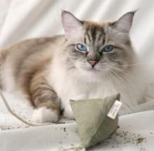 Teabag Your Cat With The 'Cuppa Tea' Catnip Teabag Toy
