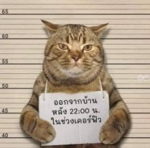 Cat Arrested For Breaking Virus Curfew Goes Viral