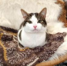 Cat Shelter Needs Knitters To Knock Out Cozy Kitty Comforters