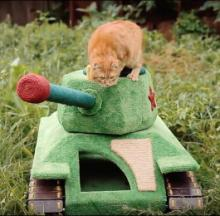 Ginger Cat Goes Full Red Army With T-34 Tank Playhouse