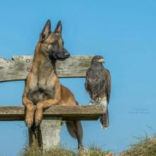 Dog and Hawk Besties