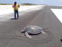 "Momma Green Turtle: ""Give Me A Ticket For An Aeroplane ...I'ma Goin' Home"""