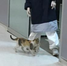 Clever Cat Mom Brings Sick Kitten To Human Hospital