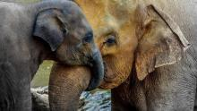 Best Animal Moms In The World Selected
