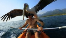 Rescued Pelican & Tanzania Camp Manager Formed BFF Bond Before Sad Good-bye