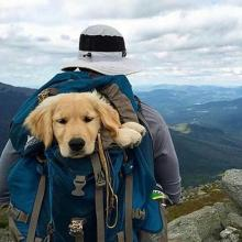 Backpacking Pup