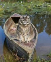 Canoeing Cat