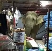 Go Home Elephant, You're Trunk... on Durian