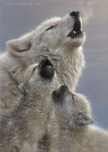 Wolf Singing Lessons