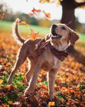 Dog with Leaves