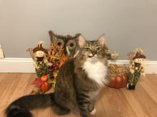 Funny Thanksgiving Cat
