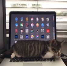 Snoozing Cat Controls Laptop With Its Breath