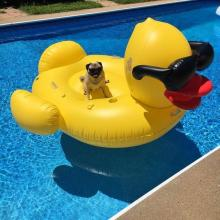 Rubber Duckie Dog
