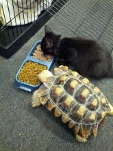 Sharing Cat and Tortoise
