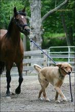 Dog and his Horse