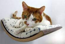 Curve Pet Bed is the Cat's (and Dog's) Pyjamas