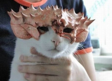 Chitin Kittens: Japan's Top 10 Crab Hat Cats