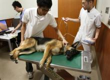 Japan Animal Referral Medical Center Calls For Dogs To Give Blood