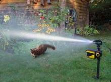 Scarecrow Motion Activated Sprinkler Deters Destructive Dogs, Cats & Wildlife