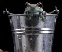 Don't Cry Over Spoiled Milk, Just Add Frogs!
