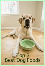 5 TOP DOG FOODS