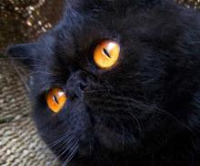 Night & The Kitty: 10 Beautiful & Mysterious Black Cats