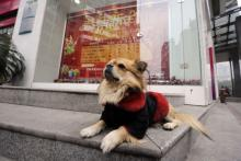 China's Most Loyal Dog Waits While His Owner Works