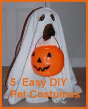 5 Super Easy Costumes For Your Dog