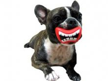 Cute Dog Pacifiers Give Great Danes Goofy Grins