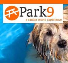 Park9 Dog and Cat Resort: High-End Pet Boarding That's Never Boring