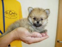 Tokyo Pet Store Succeeds With 'Rent To Own' Puppy Policy