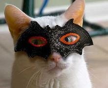 Ghoul For Cats: The Top 10 Freakiest Scariest Halloween Cat Costumes