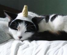 Me So Horsey! 8 Cute, Comical & Confused Unicorn Cats