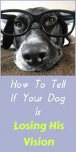 How To Tell If Your Dog Is Losing His Sight
