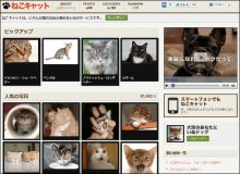Nekocat: Your Online Home for Pics & Videos of Cats