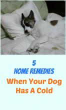 Home Remedies If Your Dog Has A Cold