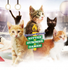 Cat-hletes Compete In Hallmark's Olympics