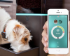 Petnet Software Balances Diets For Cats & Dogs