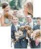 Puppy Love Weddings For Dog Loving Couples