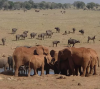'Water Man' Supplies Kenyan Wildlife With H20