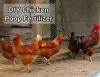 Chicken's Poop Is As Good As Its Eggs
