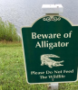 In Beaufort, It's See You Later Alligator For A Reason
