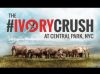 Central Park To The World: Only Elephants Should Own Ivory