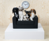 IKEA's Shaggy Dog [Cat] Story For Pets