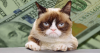 Grumpy Cat, The Richest Feline In The World Dies